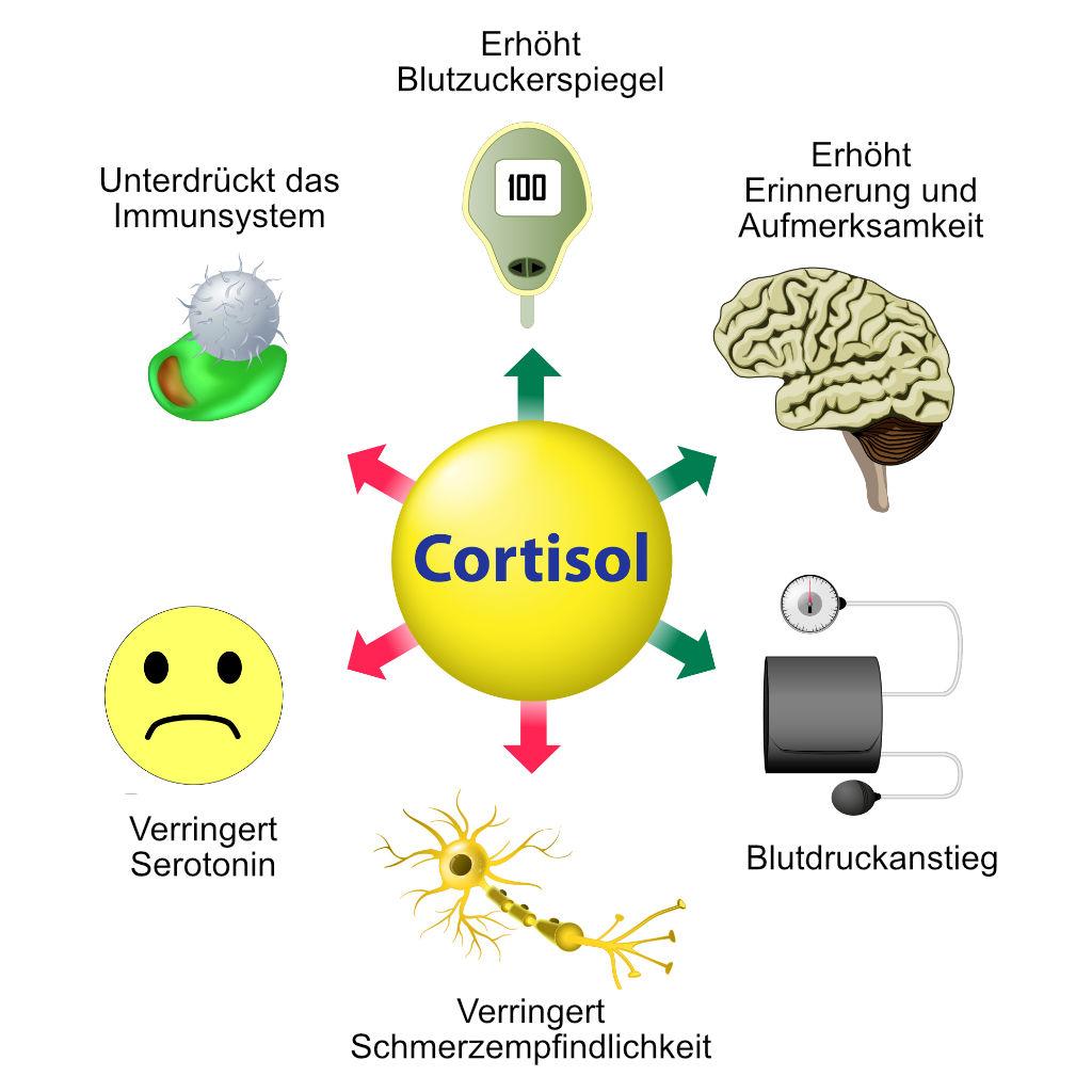 Funktionen von Cortisol, Quelle: Shutterstock
